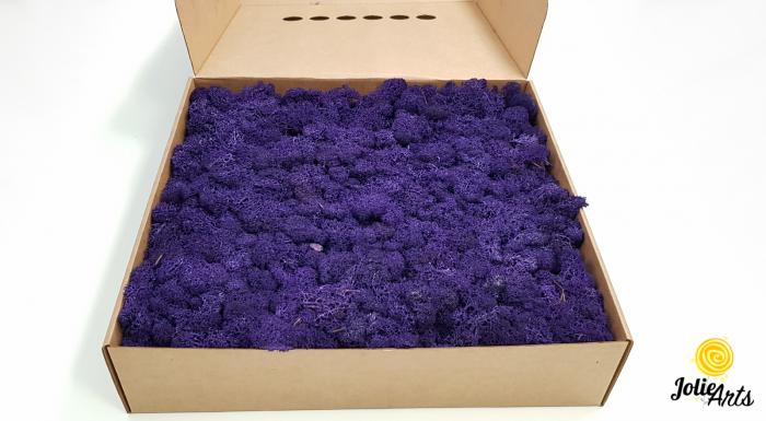 Licheni decorativi naturali stabilizati, calitate premium, culoare Mov / Purple [2]