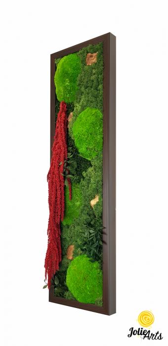 Tablou licheni, muschi si plante naturale stabilizate, Model Amaranthus 2, Jolie Arts, www.tablouriculicheni.ro-5 [0]