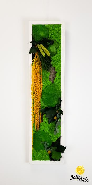 Tablou licheni, muschi si plante naturale stabilizate, Model Amaranthus galben, design vertical, 20 x 80 cm, rama neagra, Jolie Arts, www.tablouriculicheni.ro-3 [2]