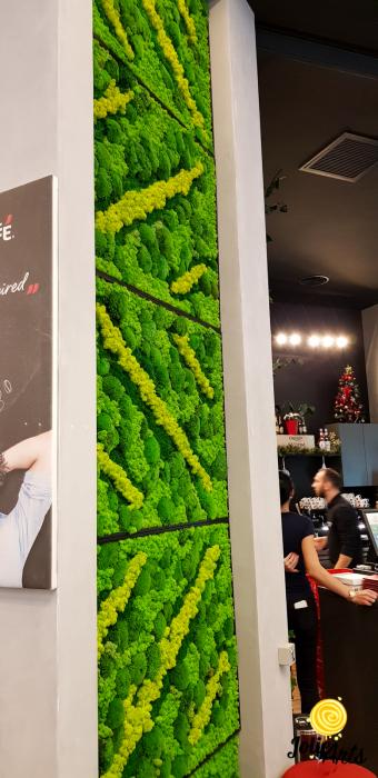 Panouri decorative cafenea, licheni, muschi bombati, plante naturale stabilizate [3]