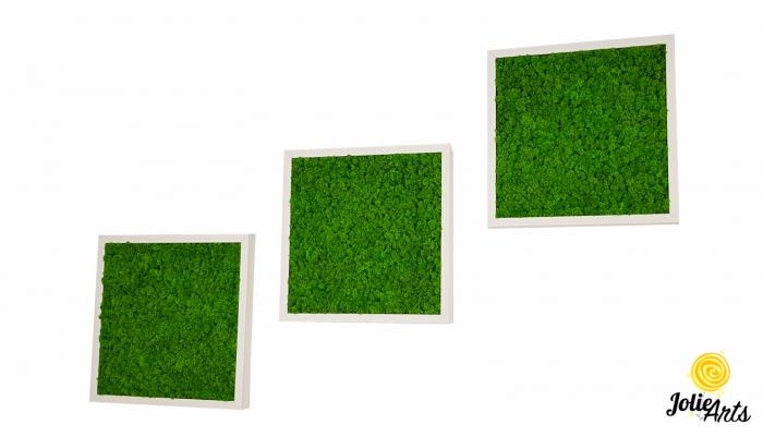 Set 3 tablouri cu licheni naturali stabilizati Jolie Arts, dimensiune 40 x 40 cm [0]