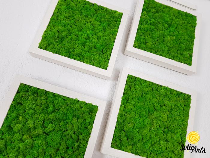 Set 4 tablouri cu licheni naturali stabilizati Jolie Arts [4]