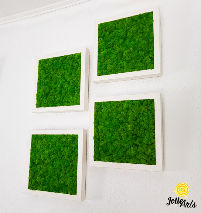 Set 4 tablouri cu licheni naturali stabilizati Jolie Arts [2]