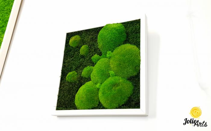 Tablou muschi plati, muschi bombati si licheni naturali stabilizati Jolie Arts. [3]