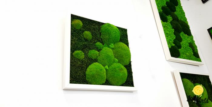 Tablou muschi plati, muschi bombati si licheni naturali stabilizati Jolie Arts. [0]