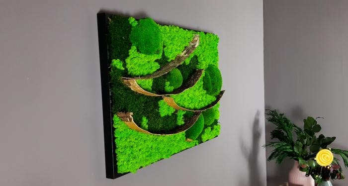Tablou licheni, muschi bombati si elemente naturale stabilizate Jolie Arts, dimensiune 50 x 70 cm [1]