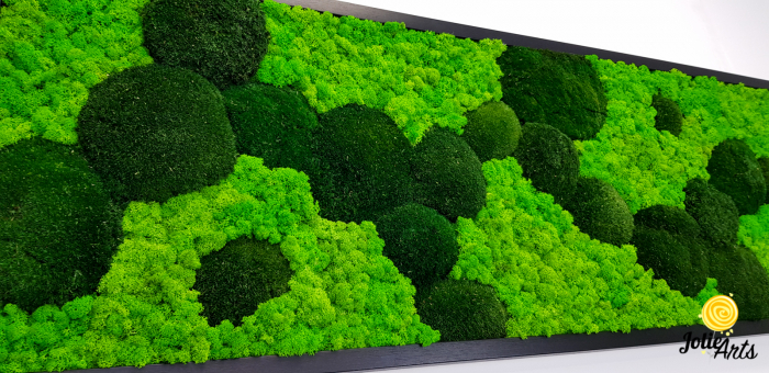 Tablou licheni, muschi bombati verde inchis, Jolie Arts [7]