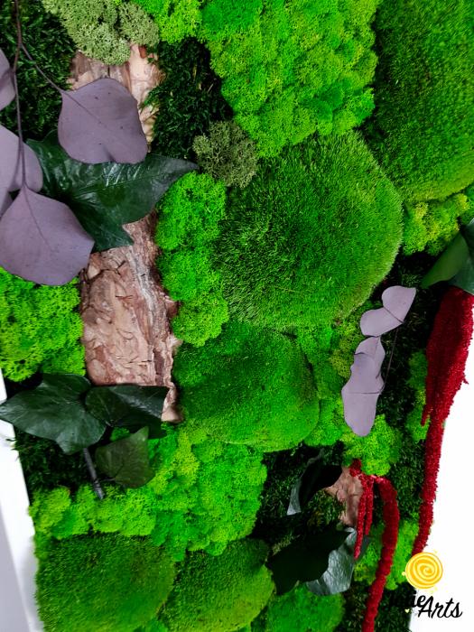 Tablou licheni, muschi, plante naturale stabilizate Jolie Arts [4]