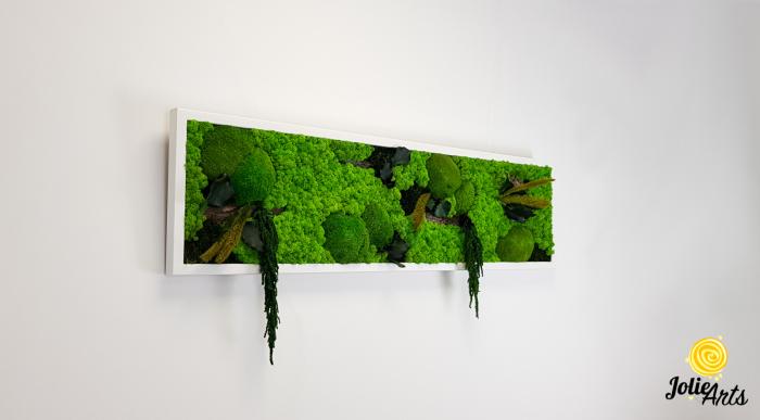 Tablou licheni, muschi si plante naturale stabilizate, Model Green Amaranthus, rama alba, dimensiune 25 x 100 cm, Jolie Arts, www.tablouriculicheni.ro-2 [5]