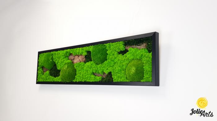 Model Scoarta: muschi de padure, scoarta pin si licheni stabilizati. [1]