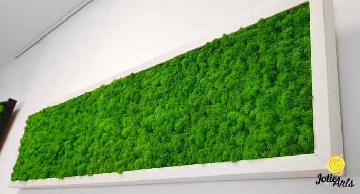 Tablou licheni naturali stabilizati, culoare verde deschis, rama argintie 20 X 80 cm, Jolie Arts, www.tablouriculicheni.ro-2 [4]