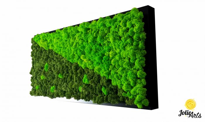 Tablou licheni naturali stabilizati, dimensiune 25 x 50 cm, rama neagra [0]