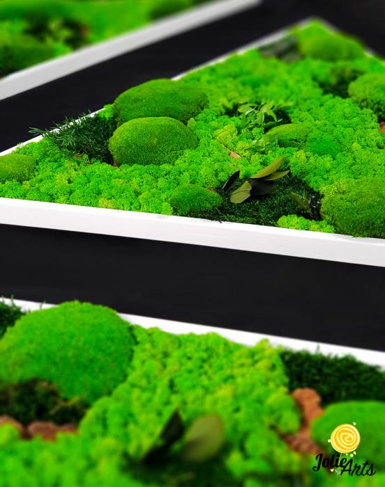 Tablouri cu licheni, muschi bombati, plante naturale stabilizate, set triunghiuri [2]