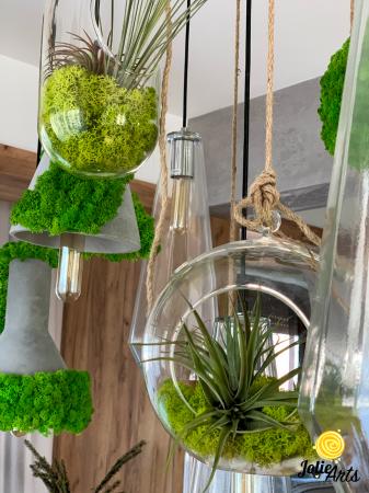Decoratiuni cu licheni, muschi, plante stabilizate, plante aeriene Jolie Arts [2]