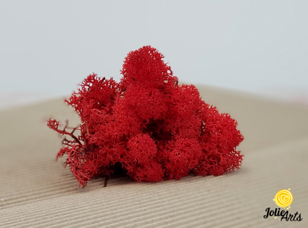 Licheni decorativi naturali stabilizati, culoare Rosu, Red 57, Jolie Arts [1]