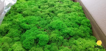Licheni decorativi naturali stabilizati, culoare Verde Deschis, Jolie Arts [1]