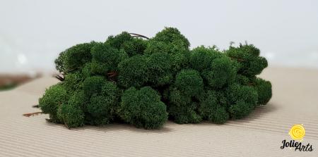 Licheni decorativi naturali stabilizati, culoare verde inchis, Jolie Arts [1]