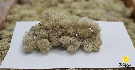 Licheni decorativi naturali stabilizati, culoare natural 56, Jolie Arts [1]