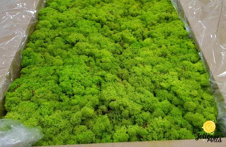 Licheni decorativi naturali stabilizati, Culoare Verde Primavara, Spring Green 55, Jolie Arts [0]