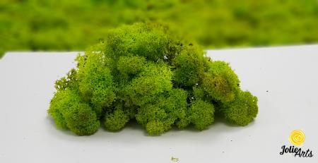 Licheni decorativi naturali stabilizati, Culoare Verde Primavara, Spring Green 55, Jolie Arts [2]