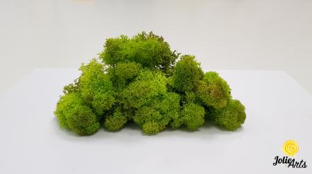 Licheni decorativi naturali stabilizati, Culoare Verde Primavara, Spring Green 55, Jolie Arts [3]