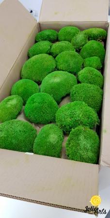 Muschi bombati stabilizati culoare Light Green. [4]