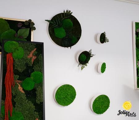 Set 6 rame pe rotund cu licheni, muschi si plante naturale stabilizate Jolie Arts [4]
