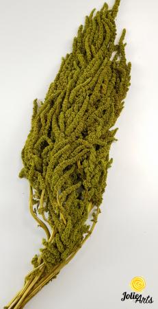 Amaranthus Verde Olive natural conservat [1]