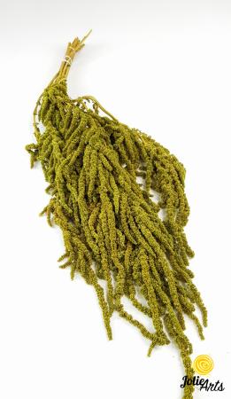 Amaranthus Verde Olive natural conservat [0]