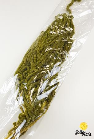 Amaranthus Verde Olive natural conservat [2]