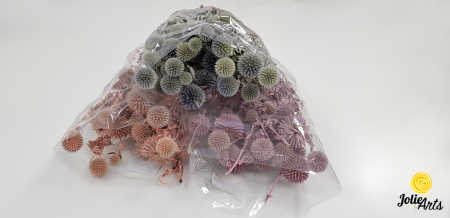 Ciulini / Echinops, colorat [0]