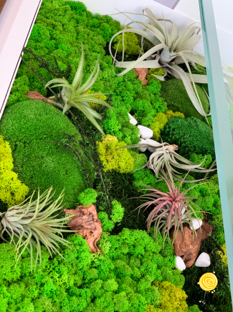 Decoratii interioare cu licheni, muschi, plante naturale stabilizate si plante aeriene [5]