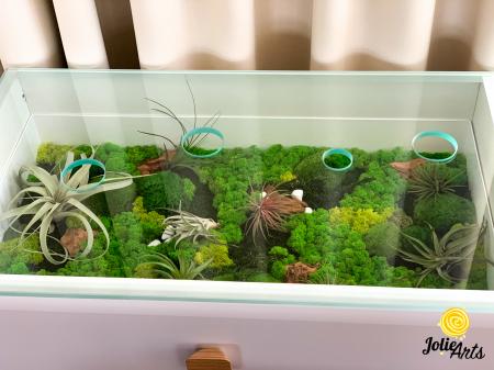 Decoratii interioare cu licheni, muschi, plante naturale stabilizate si plante aeriene [0]
