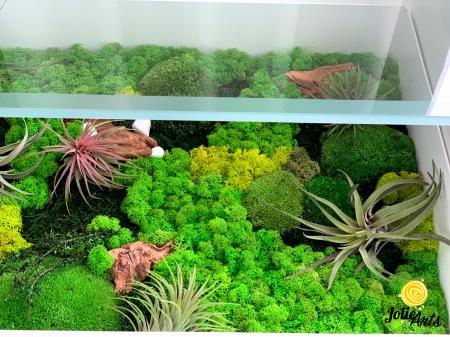 Decoratii interioare cu licheni, muschi, plante naturale stabilizate si plante aeriene [2]
