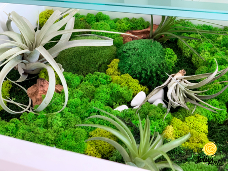 Decoratii interioare cu licheni, muschi, plante naturale stabilizate si plante aeriene [1]
