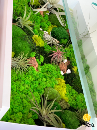 Decoratii interioare cu licheni, muschi, plante naturale stabilizate si plante aeriene [3]
