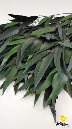 Eucalipt Pendula Verde natural conservat, frunza alungita [1]