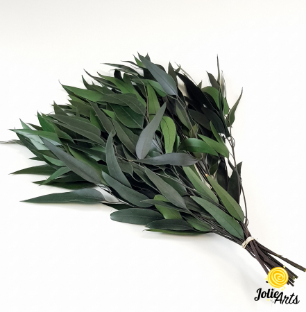 Eucalipt Pendula Verde natural conservat, frunza alungita [0]