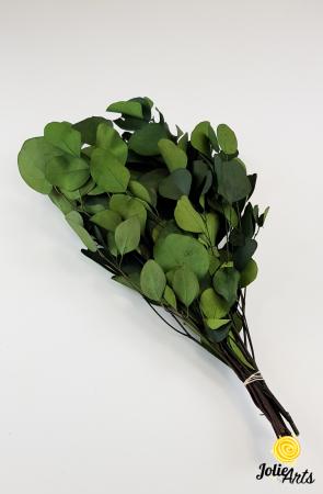 Eucalipt Populus Verde, natural conservat, frunza rotunda [0]