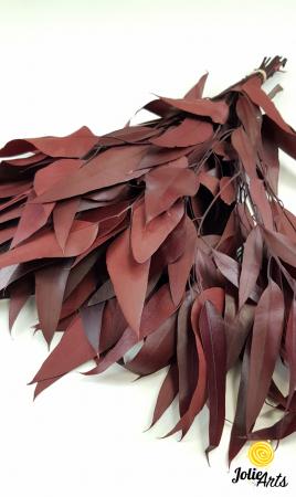 Eucalipt Pendula Rosu Bordo, natural conservat, frunza alungita [1]