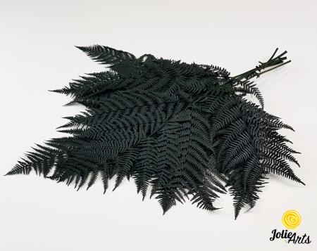 Feriga Verde inchis, naturala conservata [0]