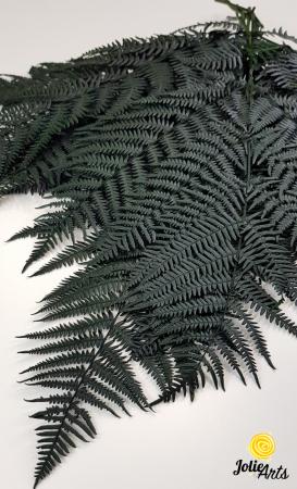 Feriga Verde inchis, naturala conservata [1]