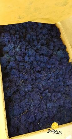Licheni decorativi naturali stabilizati, calitate premium, culoare Albastru intens / Royal Blue [0]