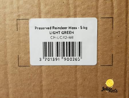 Licheni decorativi naturali stabilizati, culoare Light Green [5]