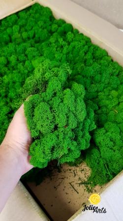 Licheni decorativi naturali stabilizati, culoare Nature Green [1]