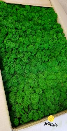 Licheni decorativi naturali stabilizati, culoare Nature Green [0]
