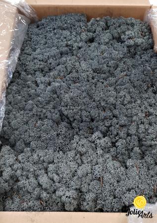 Licheni decorativi naturali stabilizati, culoare Negru, Black 52, Jolie Arts [0]