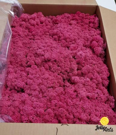 Licheni decorativi naturali stabilizati, culoare Cyclamen 69 [0]