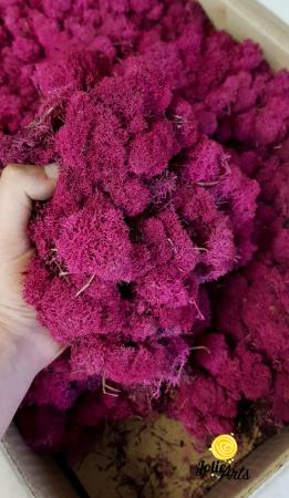 Licheni decorativi naturali stabilizati, culoare Fuchsia [1]