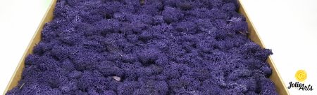 Licheni decorativi naturali stabilizati, calitate premium, culoare Mov / Purple [0]